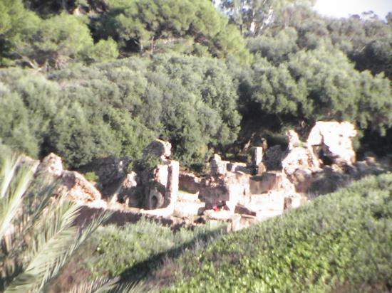 les Ruines tipaza